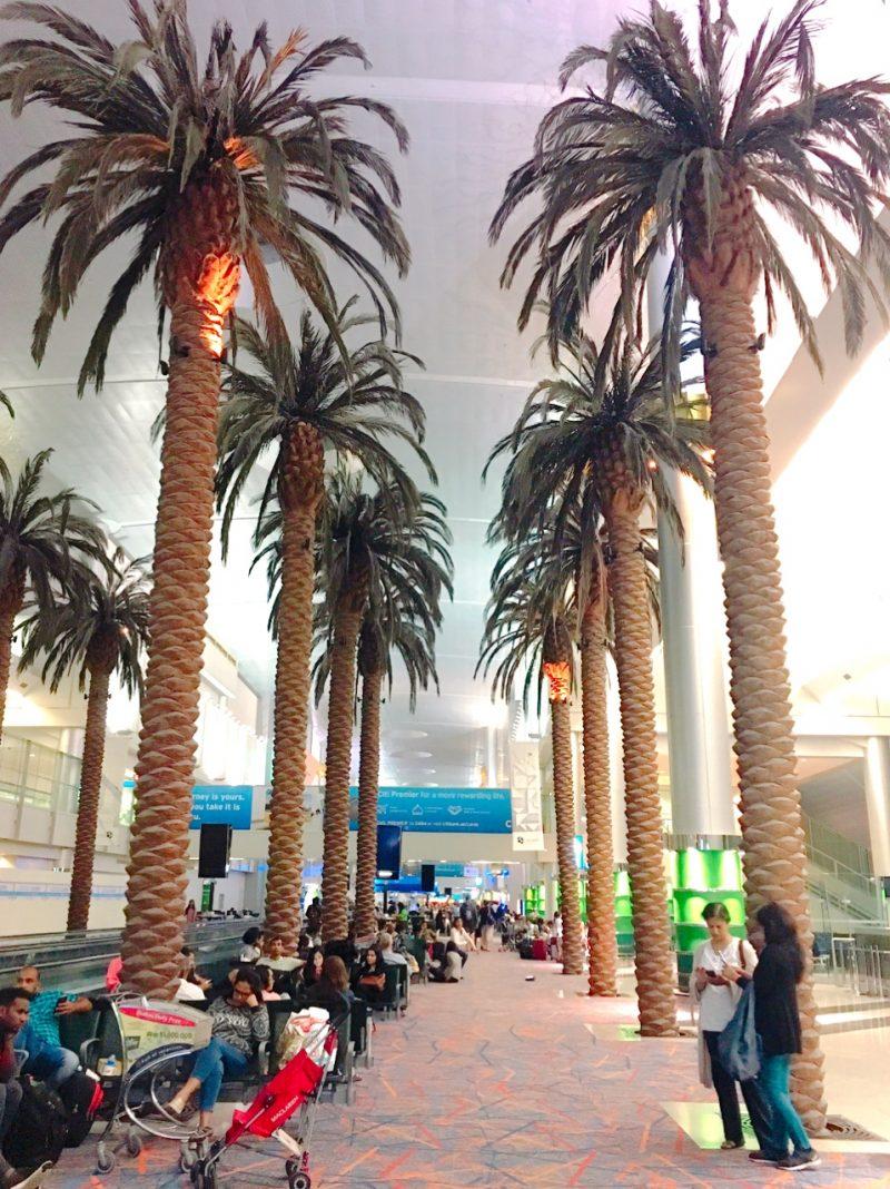 ドバイ空港のヤシの木