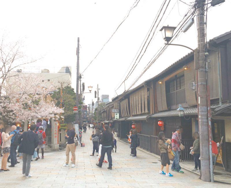 京都の桜の名所♡祇園白川を散策