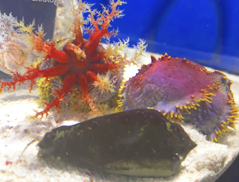 ニフレル*色にふれるの黒い魚