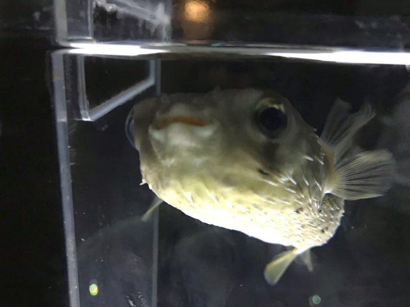 ニフレルのへんな顔した魚