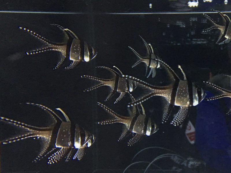 ニフレルの綺麗な模様の魚