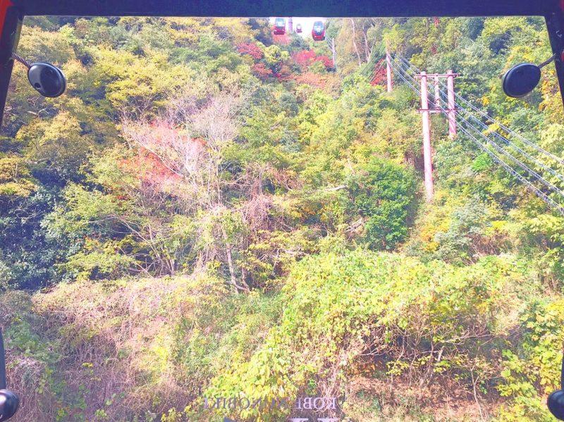 ロープウェイで日本最大級の神戸の布引ハーブ園へ