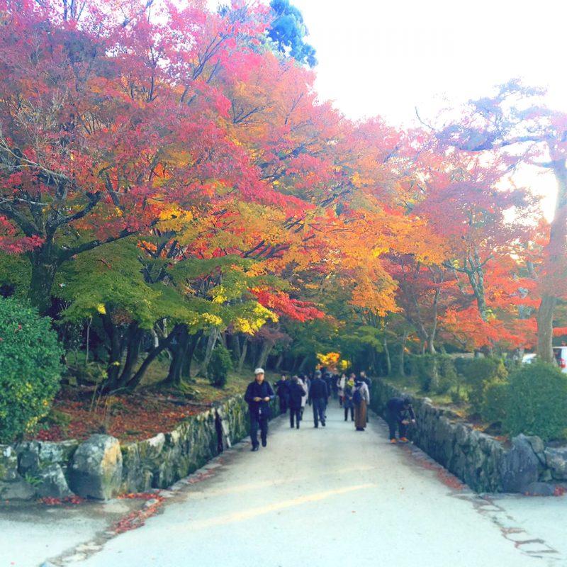 日本最古の神社建築!世界遺産宇治上神社でうさぎみくじ