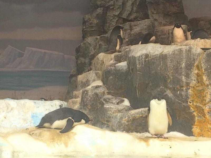 日本最大級の名古屋港水族館♡見るべき③マイワシトルネード