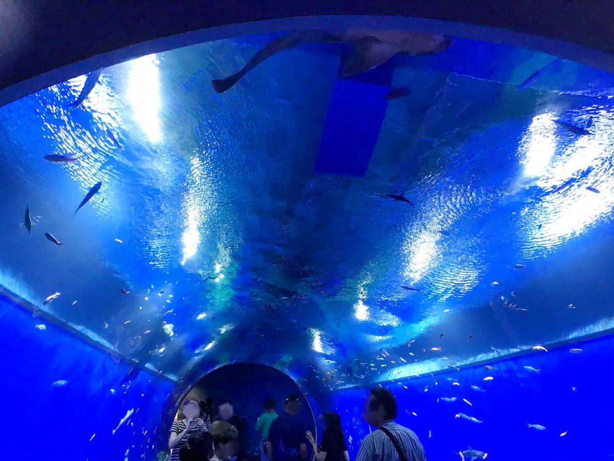大阪のおすすめ観光スポット♡海遊館に行ってきました!